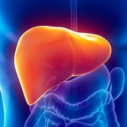 How A Toxic Liver Will Impact Your Health