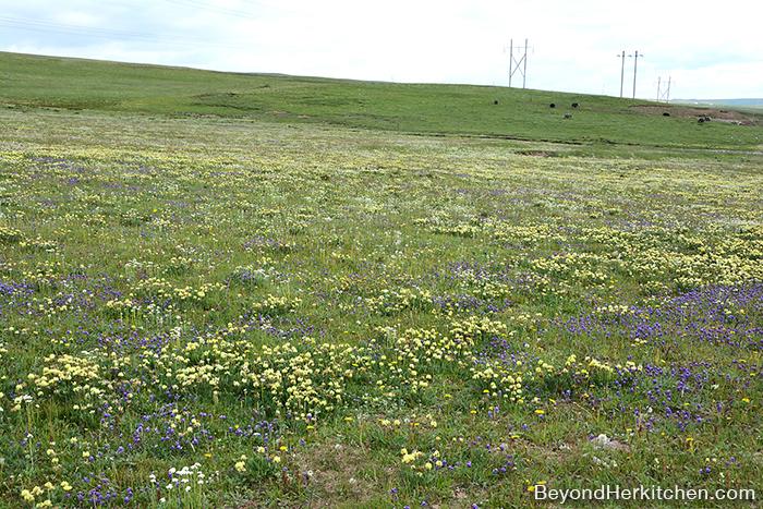 wildflowers, tibetan plateau grassland