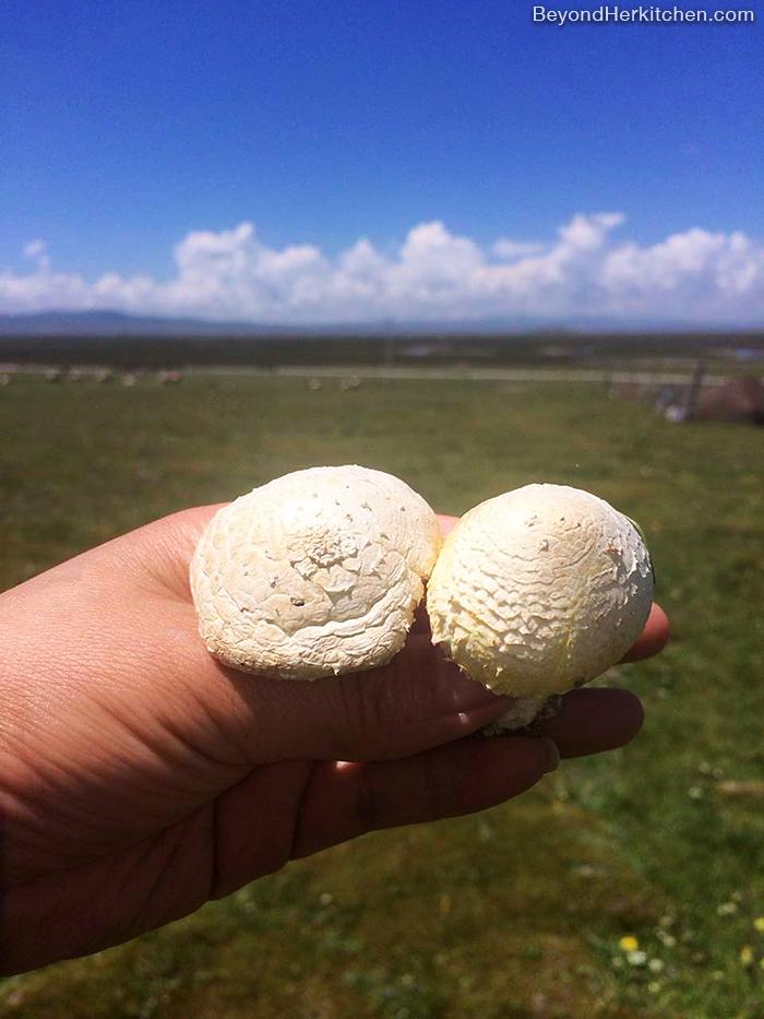 Tibetan wild yellow mushrooms