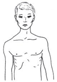 The morphology of the human body. (5/6)