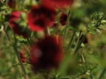 Mysticism & Flowerage 24