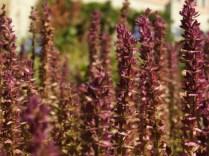 Mysticism & Flowerage 4.1
