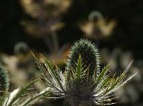 Mysticism & Flowerage 6