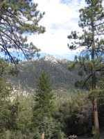 Seven Pines Trail 002