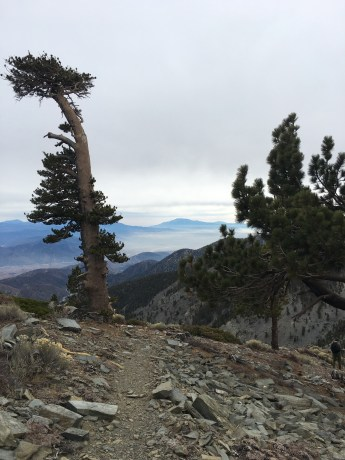 Mt. Baldy via Backbone 011