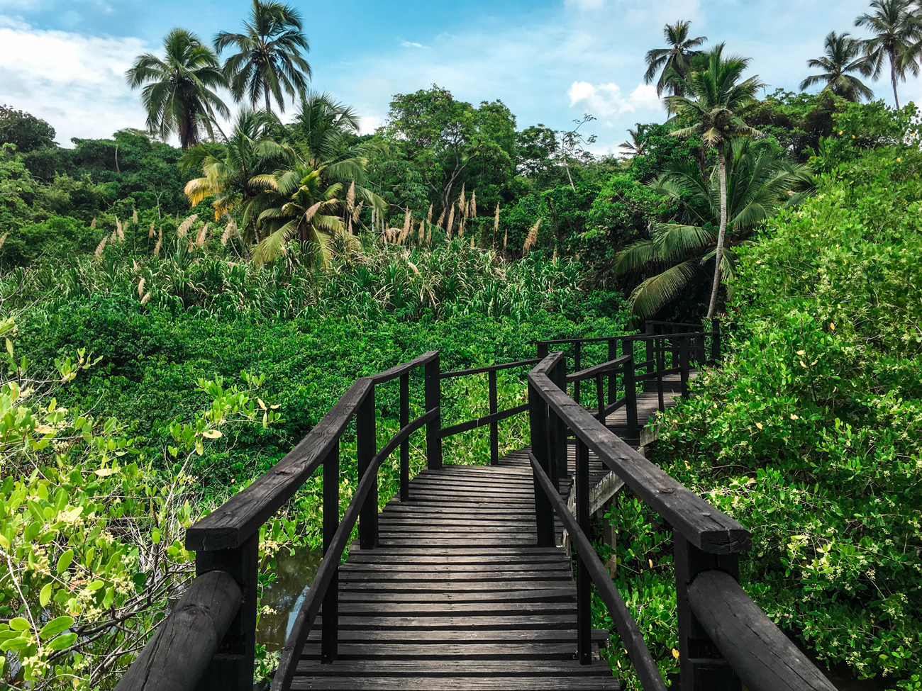 Tayrona National Park, Santa Marta Colombia big forest and a wooden bridge in the middle