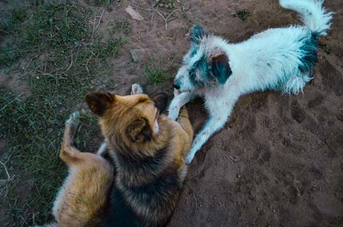 Two puppies looking at each other on the finca in Salento, Colombia