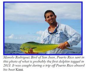 2013_San_Juan_release dolphinfish research program common dolphinfish, dolphinfish, mahi mahi, dorado
