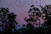 West Sunrise