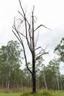 Blasted Black Dead Tree