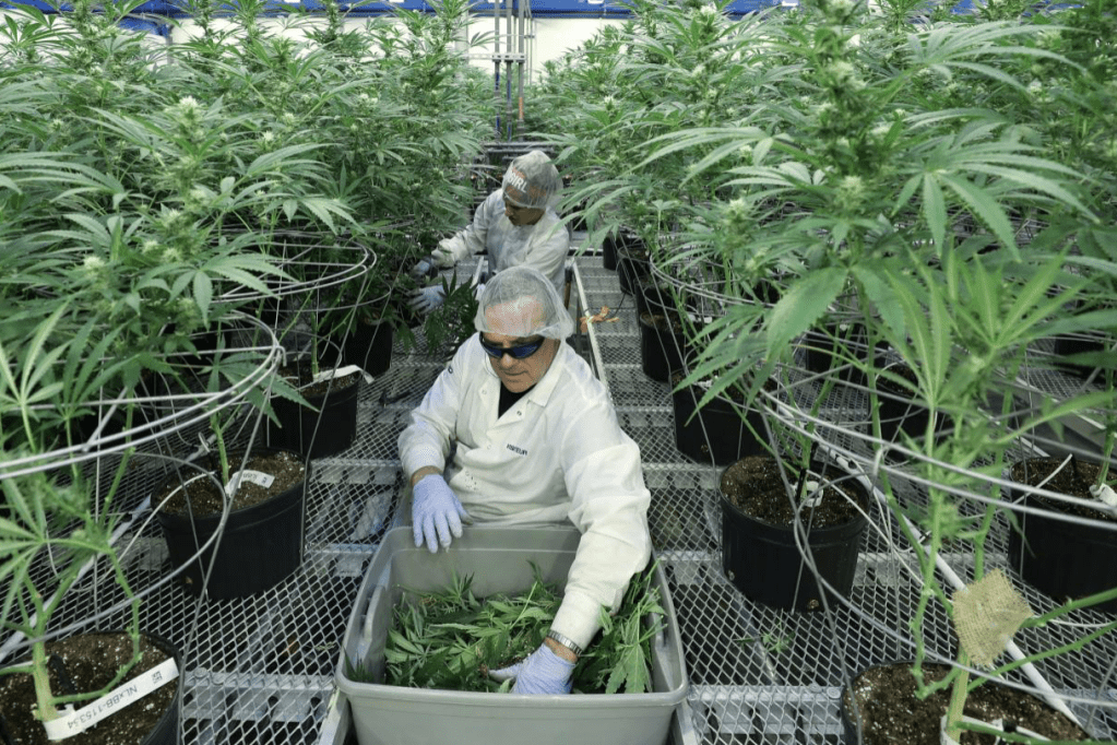 Universities are offering degrees in weed science