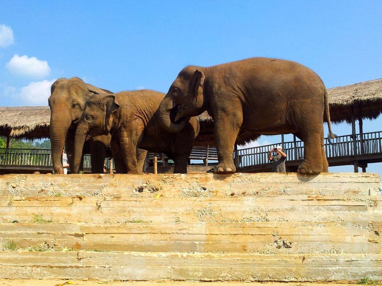 An Elephant On The Tennis Court