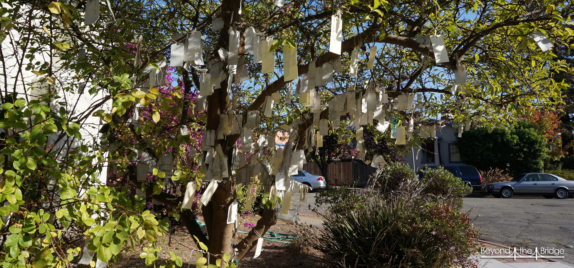 Gratitude tree faites un v u beyond the bridge - L arbre a souhait ...