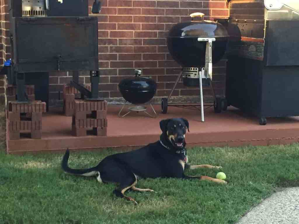 Gratuitous photo of Shelby with a ball, resting by grills.