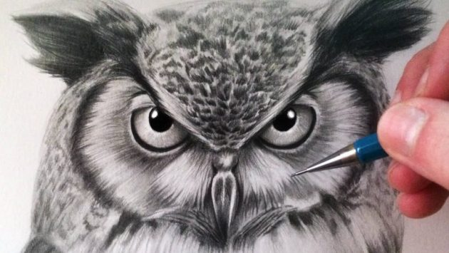 Owls Drawing