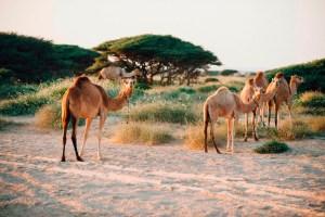 Oman Photos