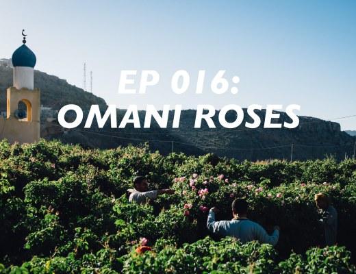 roses, omani rose harvest, jebal akhdar, al ain