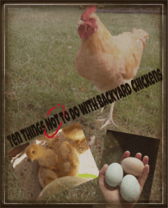 Eleven Things NOT to do with Backyard Chickens