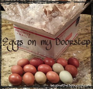 wpid-eggs-on-my-doorstep-.jpg.jpeg