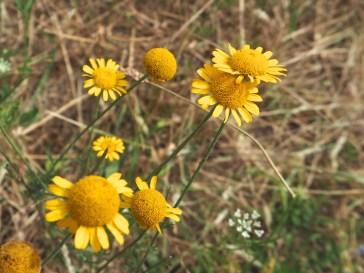 Petit Ceinture wild flowers