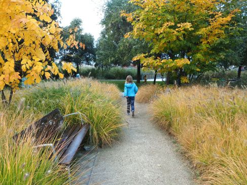 and golden grasses