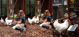 chickens_technologhy_3bar_hilary_sunshine_peanut_945x451