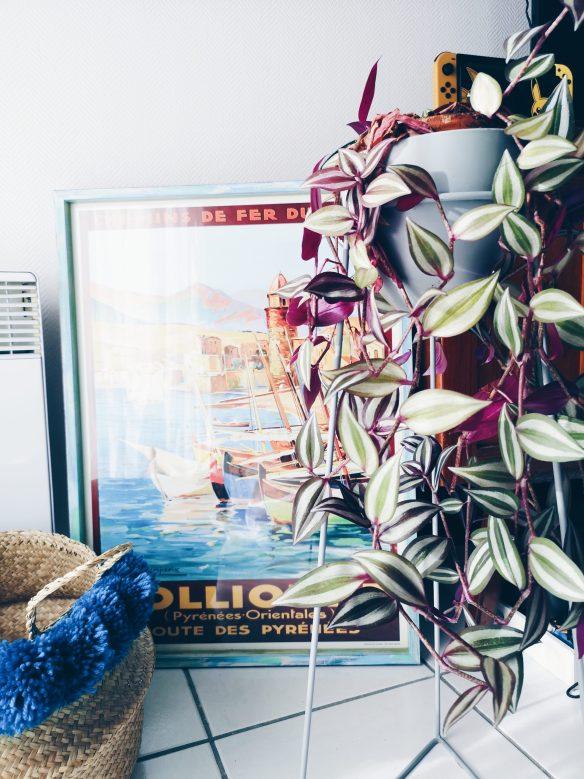 décoration (tableau de Collioure) et fleur (misère violette) chez beyondzewords