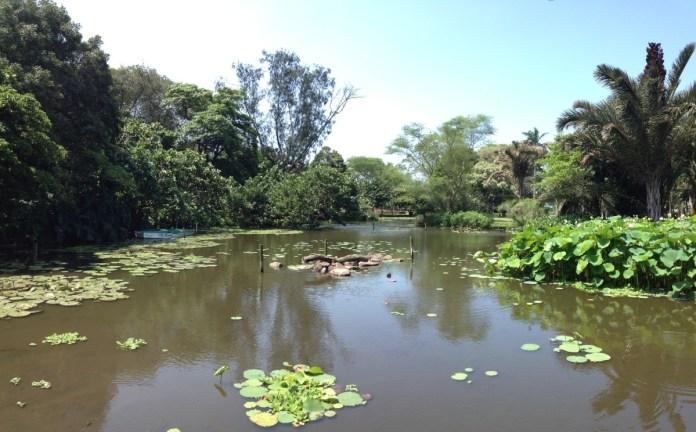 botanicka zahrada v durbane