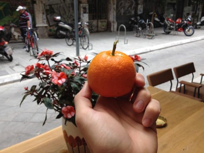 pomaranc-strom