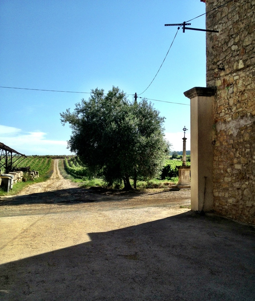 Domaine Saint Hilaire outside Sete, France