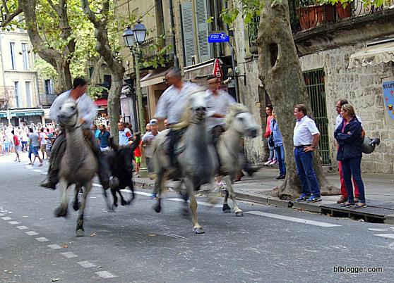 Bulls running in Uzes