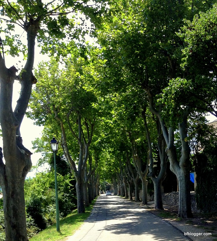 Lanes lined with plane trees in Barroux