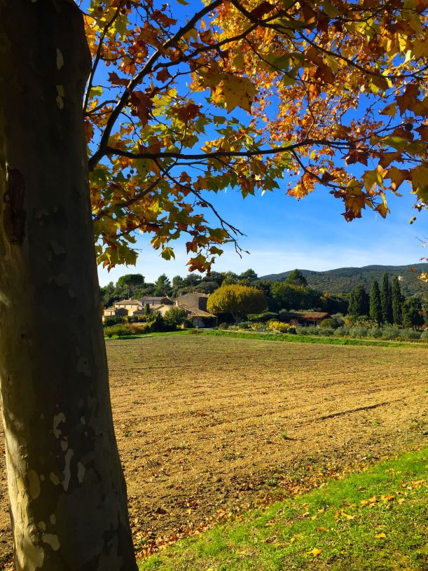 Fall in Provence
