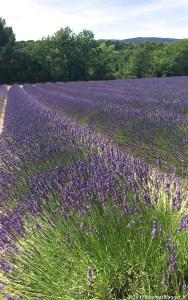Provence Holidays