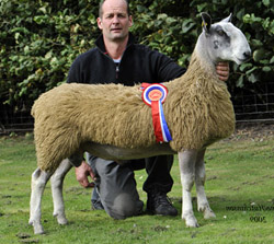 Champion 09 Hexham Heddon Valley son