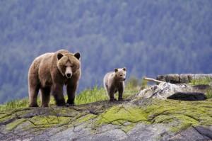 kleine_grizzly_familie_pr