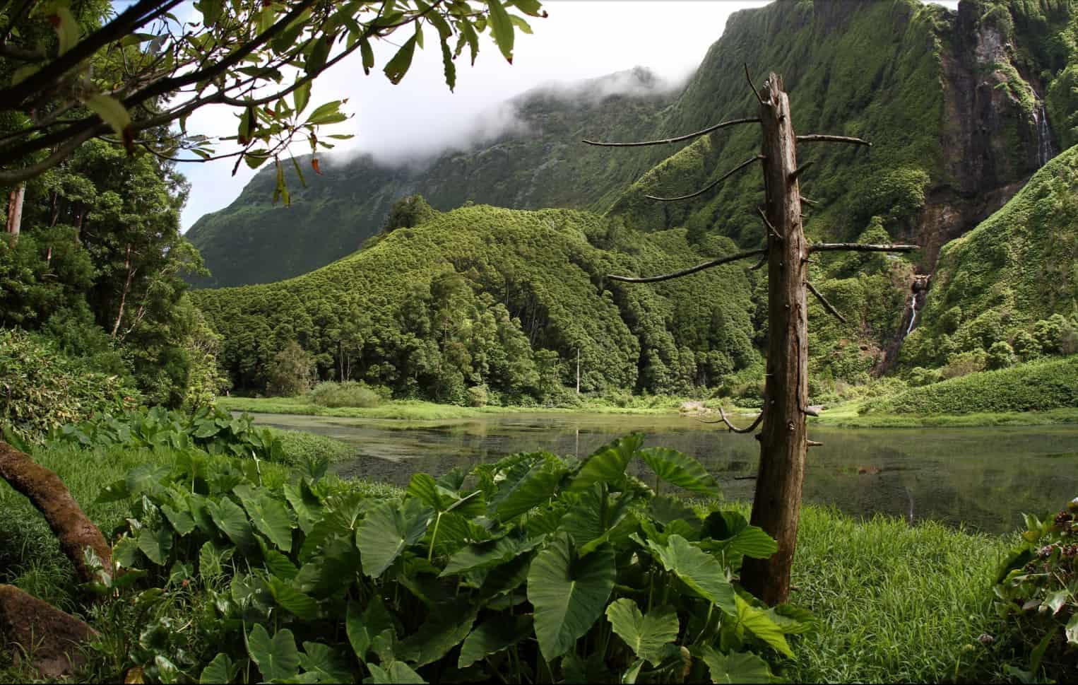 Haristoy-Açores