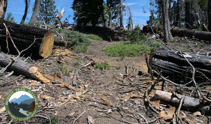 Just before Section 2 begins, trail maintenance through the 2008 burn ends.