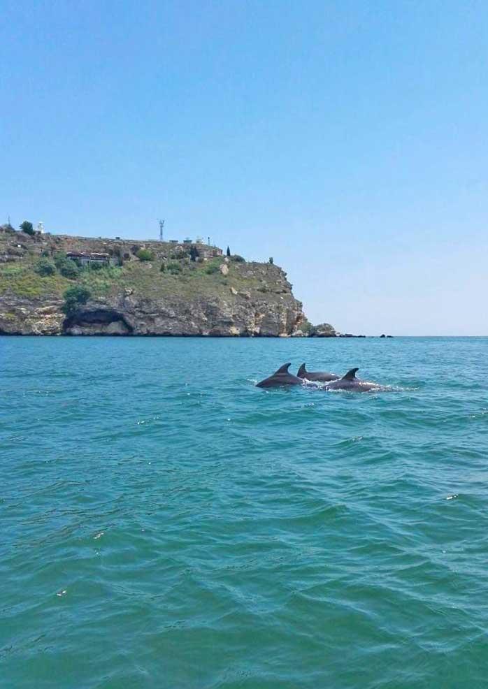 Делфини в Каварна