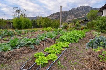 Био зелени салати в градината на Крис и Цвети