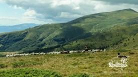 Един овчар на 1700 метра надморска височина