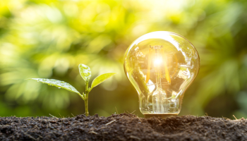 Plant and light bulb growing in the ground depicting green energy