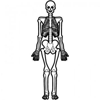 骨格を知るものは…