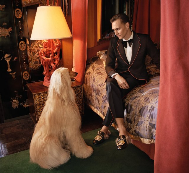 Tom Hiddleston para Gucci