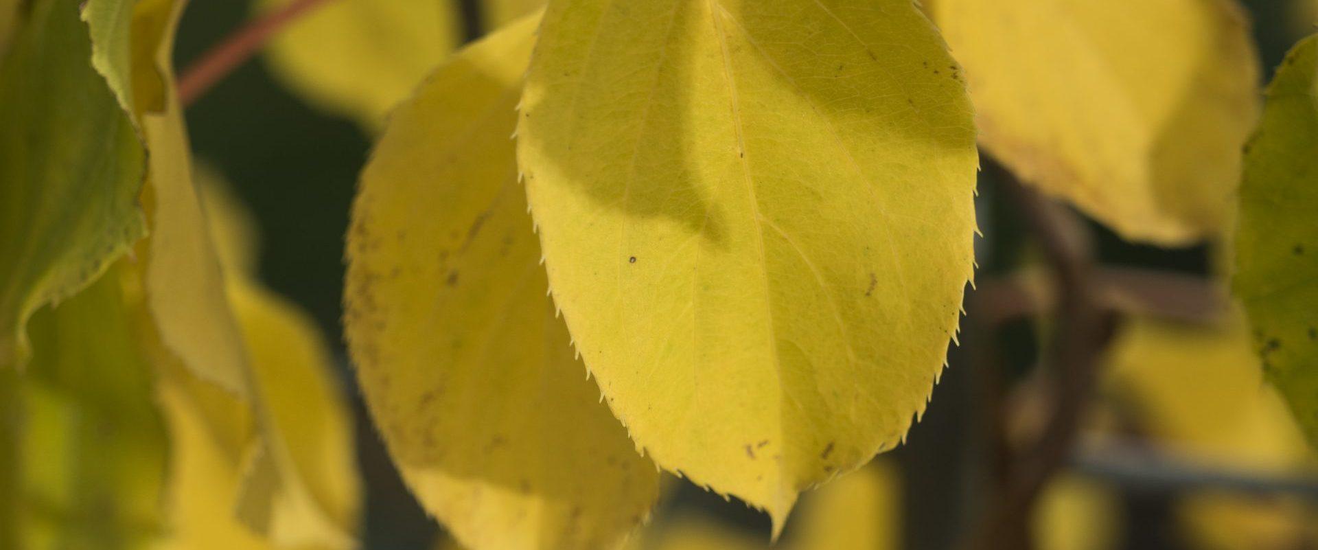 Gelbe Herbstimmung
