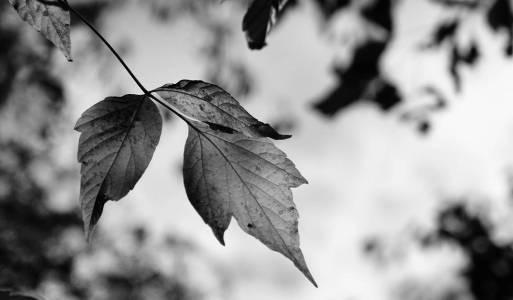 Die Welt in schwarz-weiß