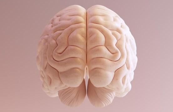 Scientists have understood why people have a big brain – BGR