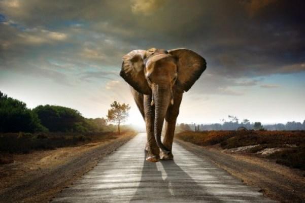 Elegant elephant representing alpha adwords advertiser