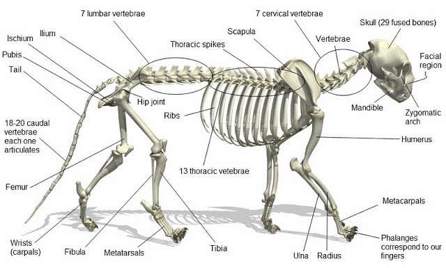 inside skull diagram craftsman garage door motor wiring tiger today online