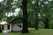 Владайски Манастир Св. Петка